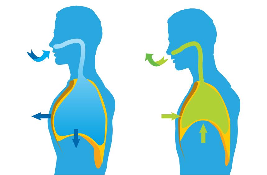 breathingdiagram - BioYoga - Pratica Bioenergetica